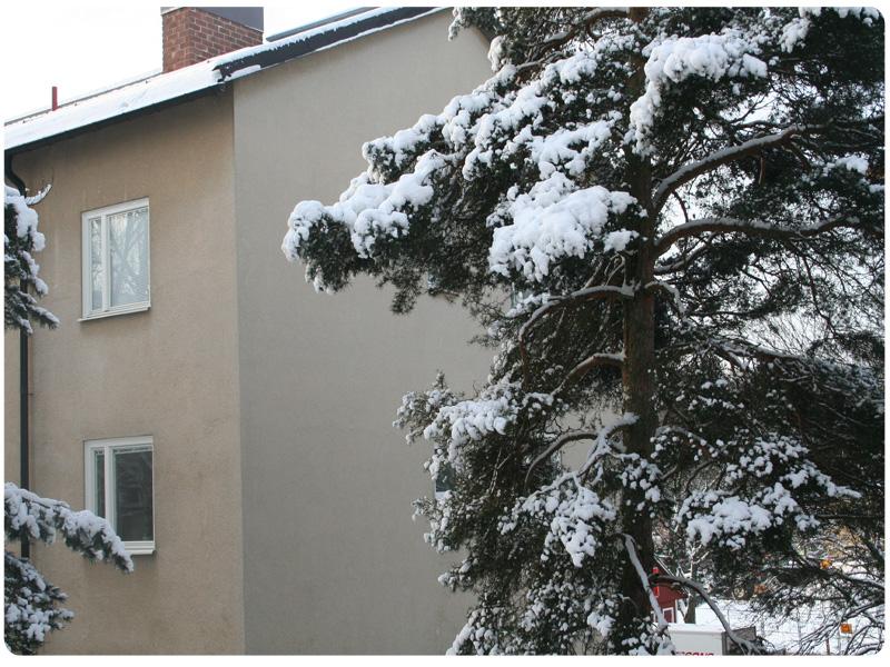 Höst-vinterbild 1